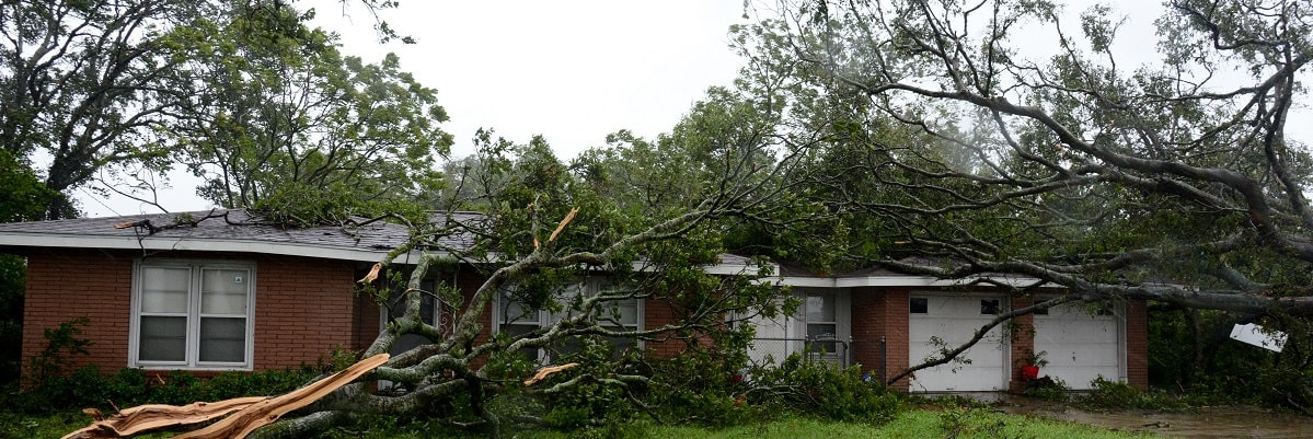 Two fallen trees leaning against a house