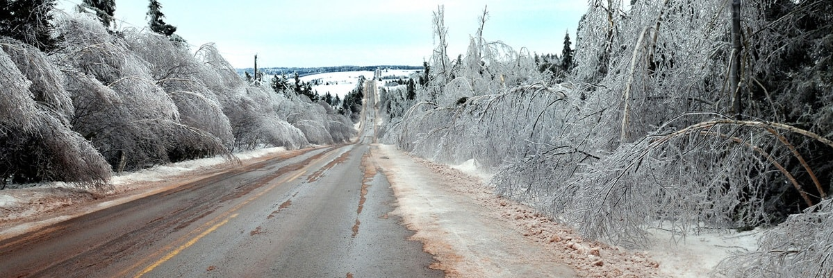 Trees covered with ice line a highway during the winter